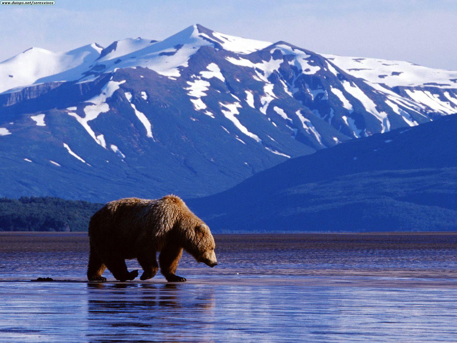 Nature Park Place Bear Mountain