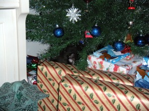 Do you see the kitty ear there under the tree?  He was NOT a present, just merely taking a nap!