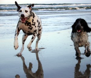 dogs-running-on-the-beach
