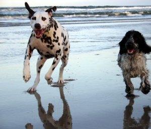 dogs-running-on-the-beach