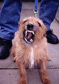 aggressive-dog-200-x-283_full1