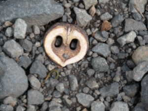 What's this?  A face in the road!