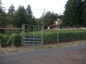 A closeup of the vineyard below my pasture